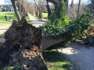 Un fort coup de vent a déraciné trente-deux arbres après les violentes pluies tombées sur la région.